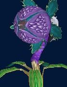 腐食花.jpg